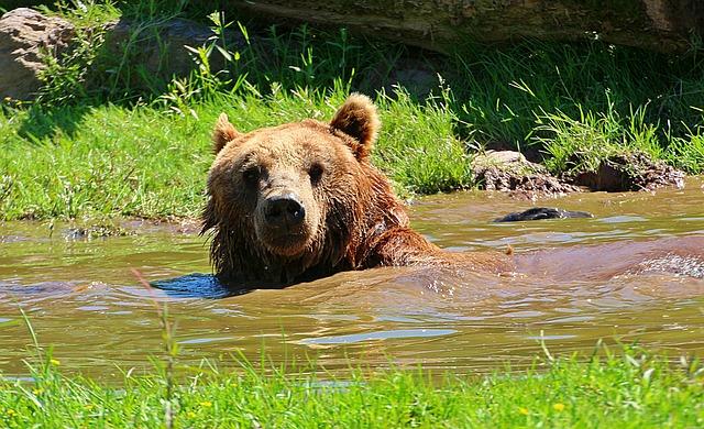 bear-1580037_640
